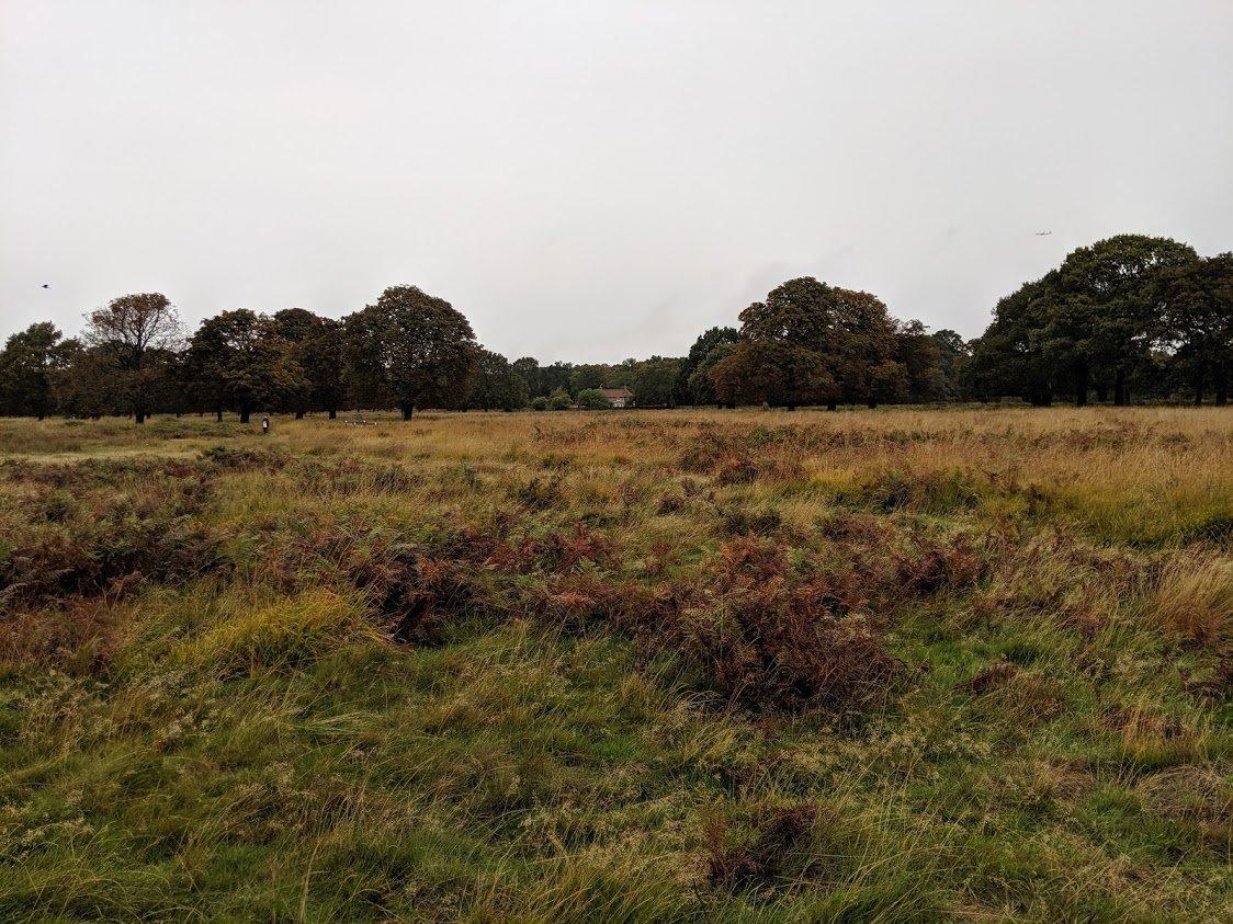 playground Earth | Richmond Park View | London