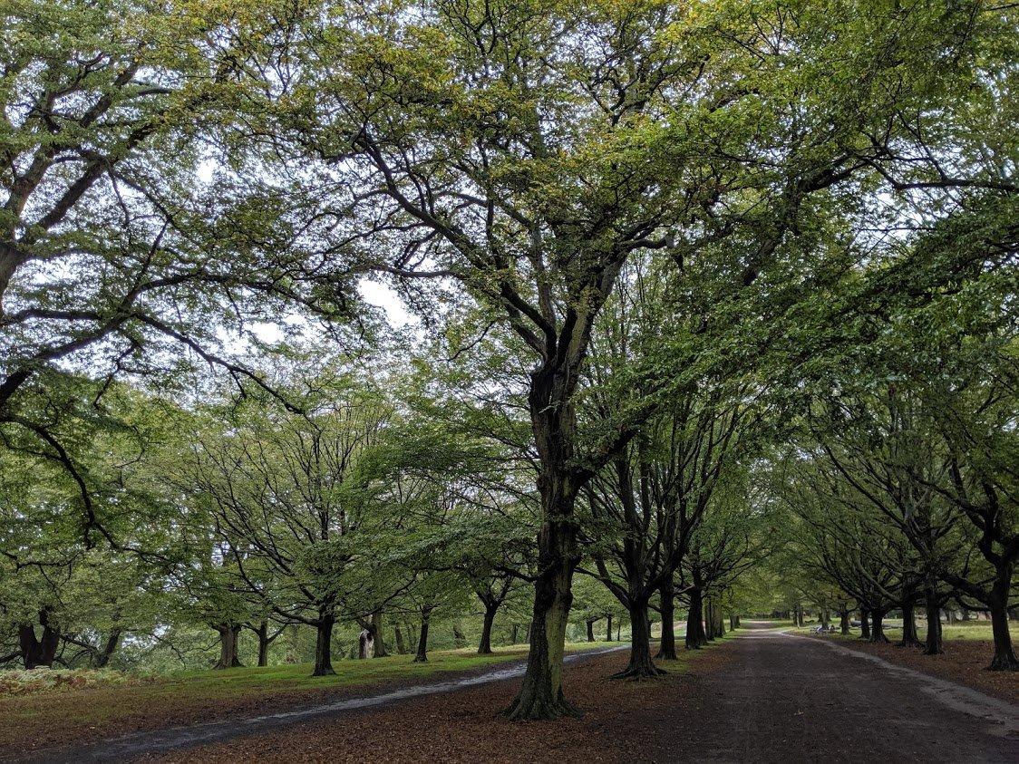 Playground Earth   Richmond Park Tree Path   London