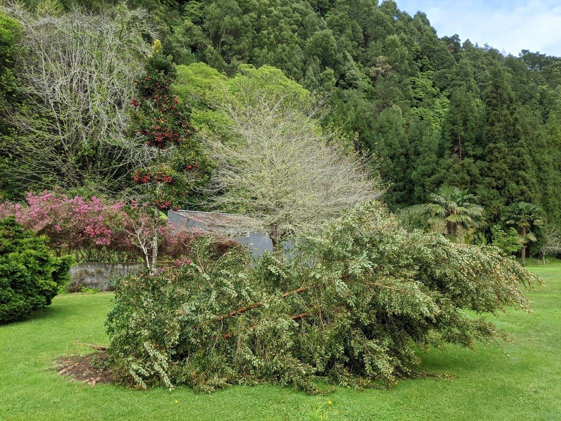 Playground Earth | Azores | Fallen Tree