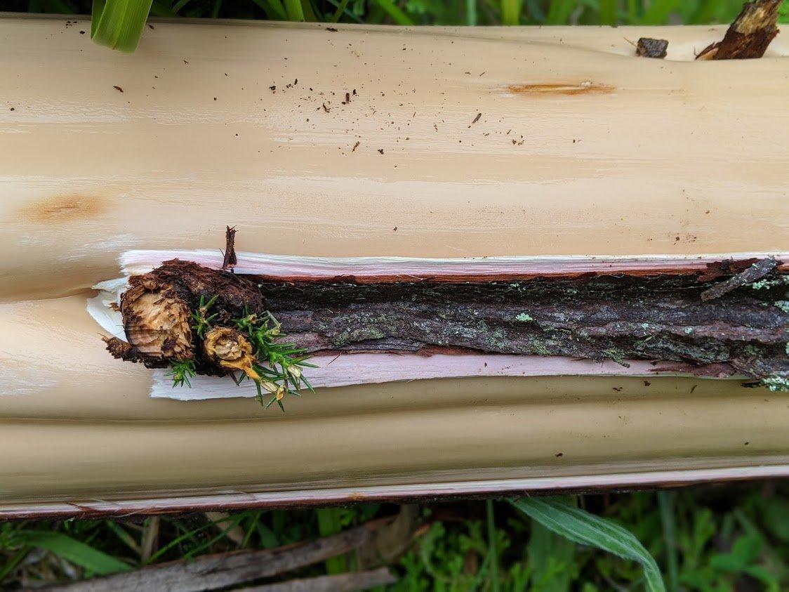 Playground Earth | Azores | Japanese Cedar Bark