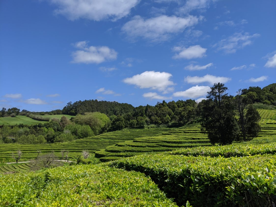 Playground Earth | Sao Miguel | Tea Fields