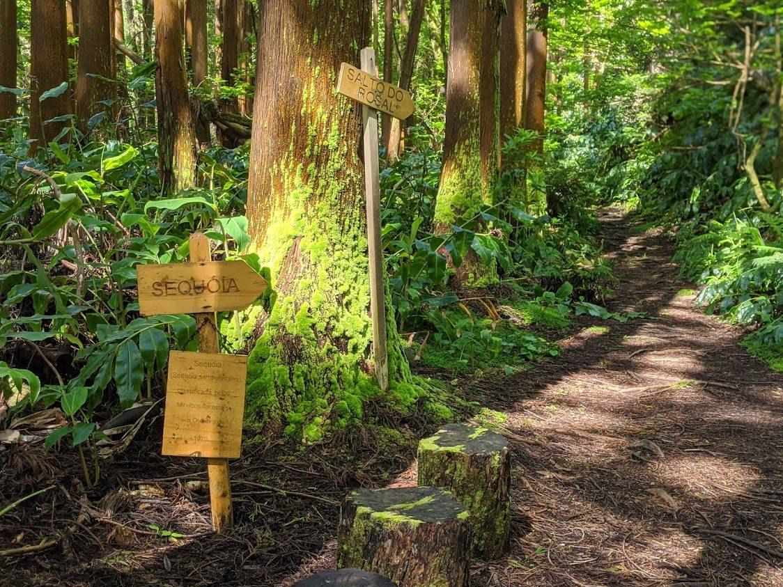 Playground Earth | Mata Jardim Signs