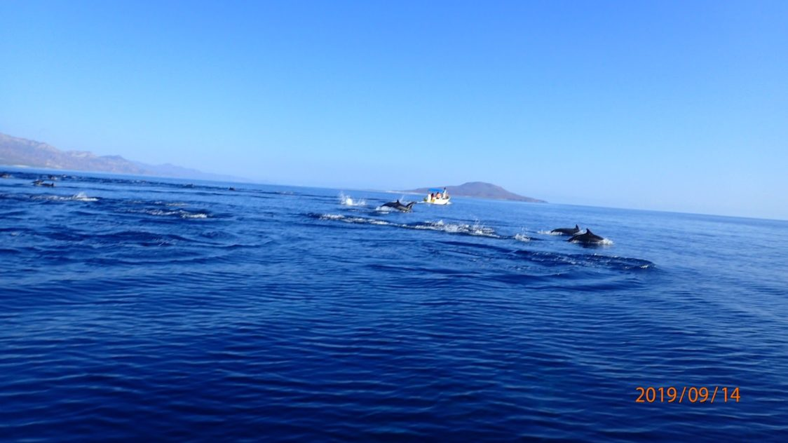 Playground Earth   Loreto l Dolphins in the Bay