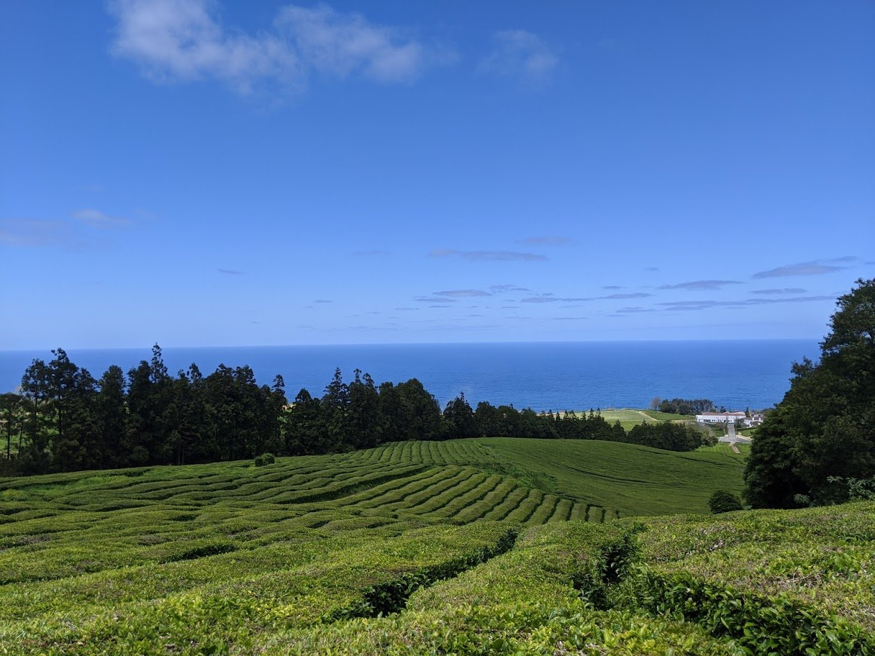 Playground Earth | Tea Plantation