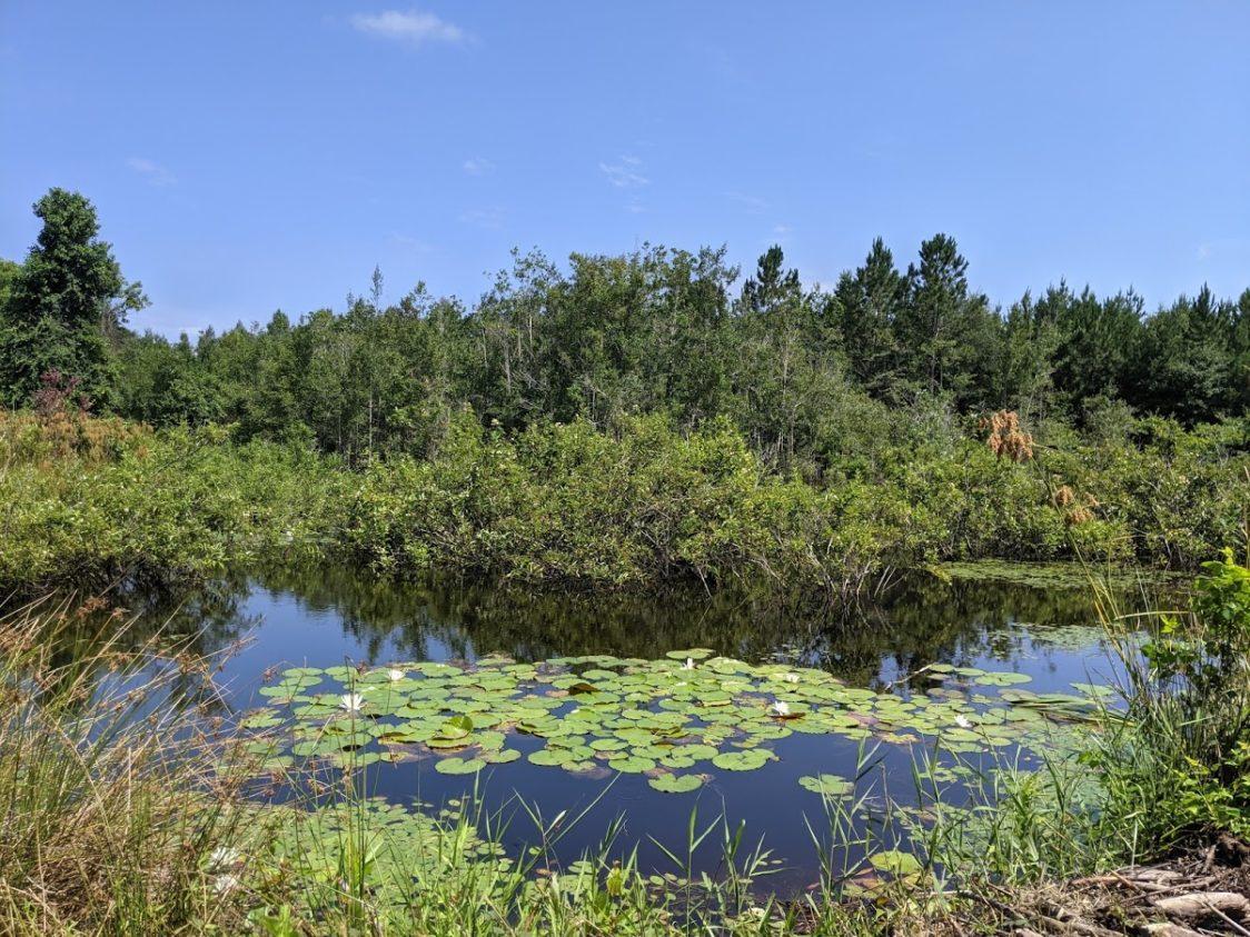 PGE l Woodpecker Trail Olive Farm l Olie's Pond